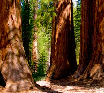 excursiones parques nacionales california